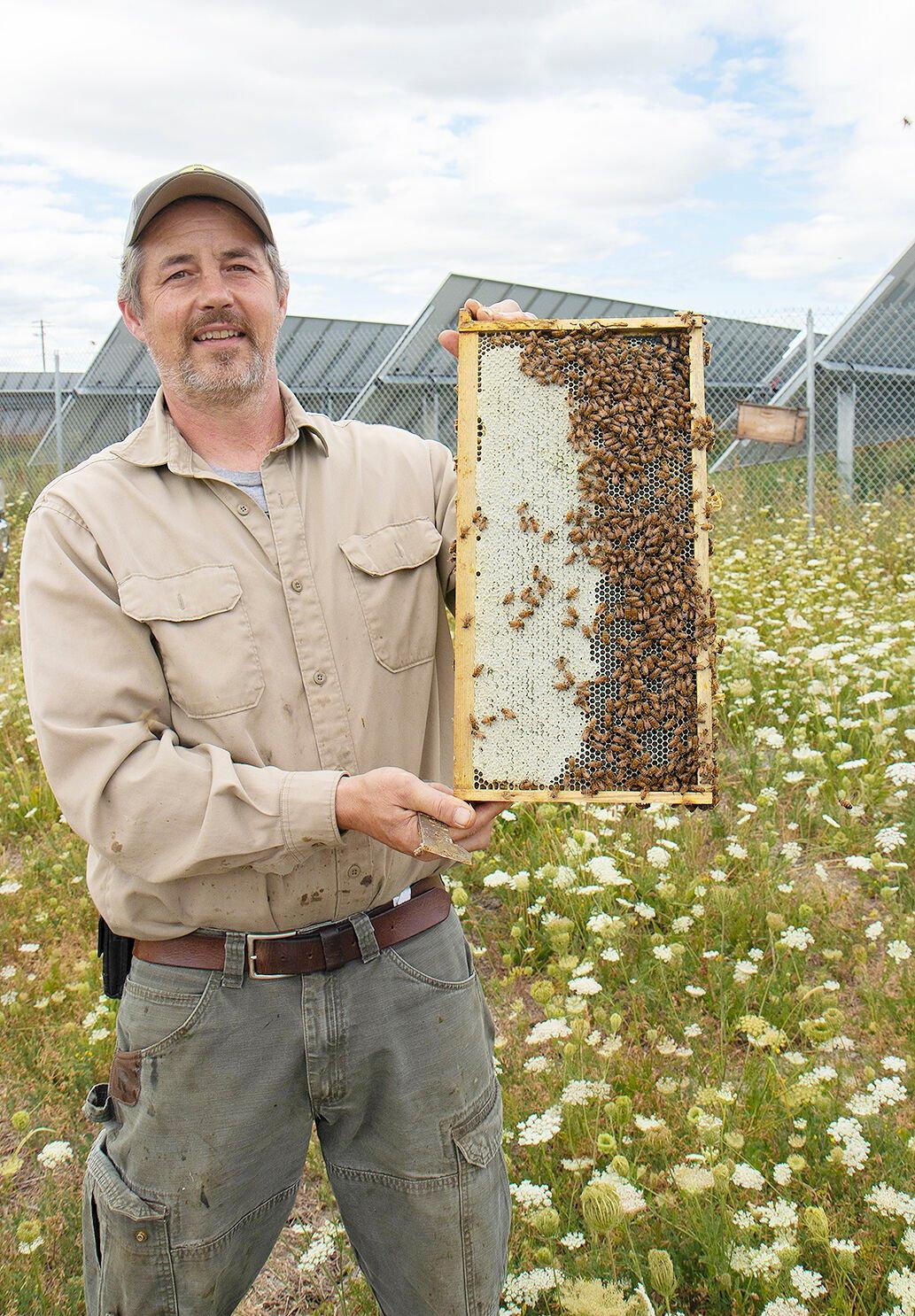 SM honeycomb