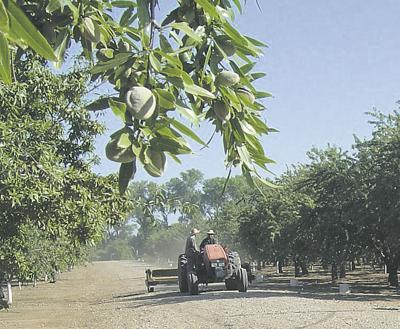 Growers cheer almonds
