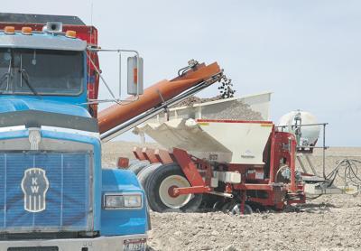 Process potato industry struggles