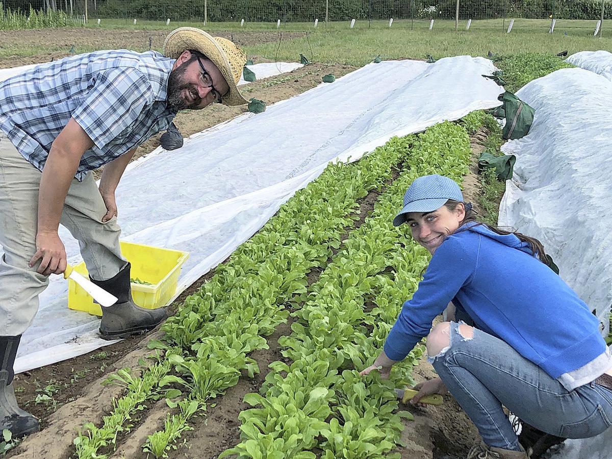 Organic Farm School taking applications for 2019 class