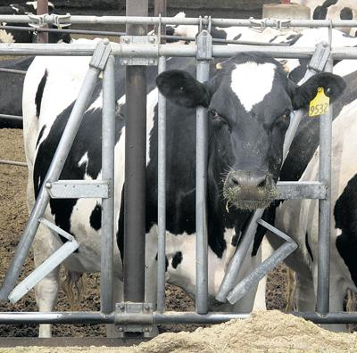 Idaho ag exports well ahead of record pace