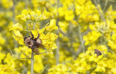 Workshops showcase canola as 'opportunity crop'