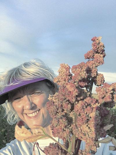 Promising herbicide undergoing residue trials for quinoa use