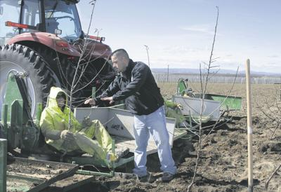 Crews battle wind, cold to plant trees