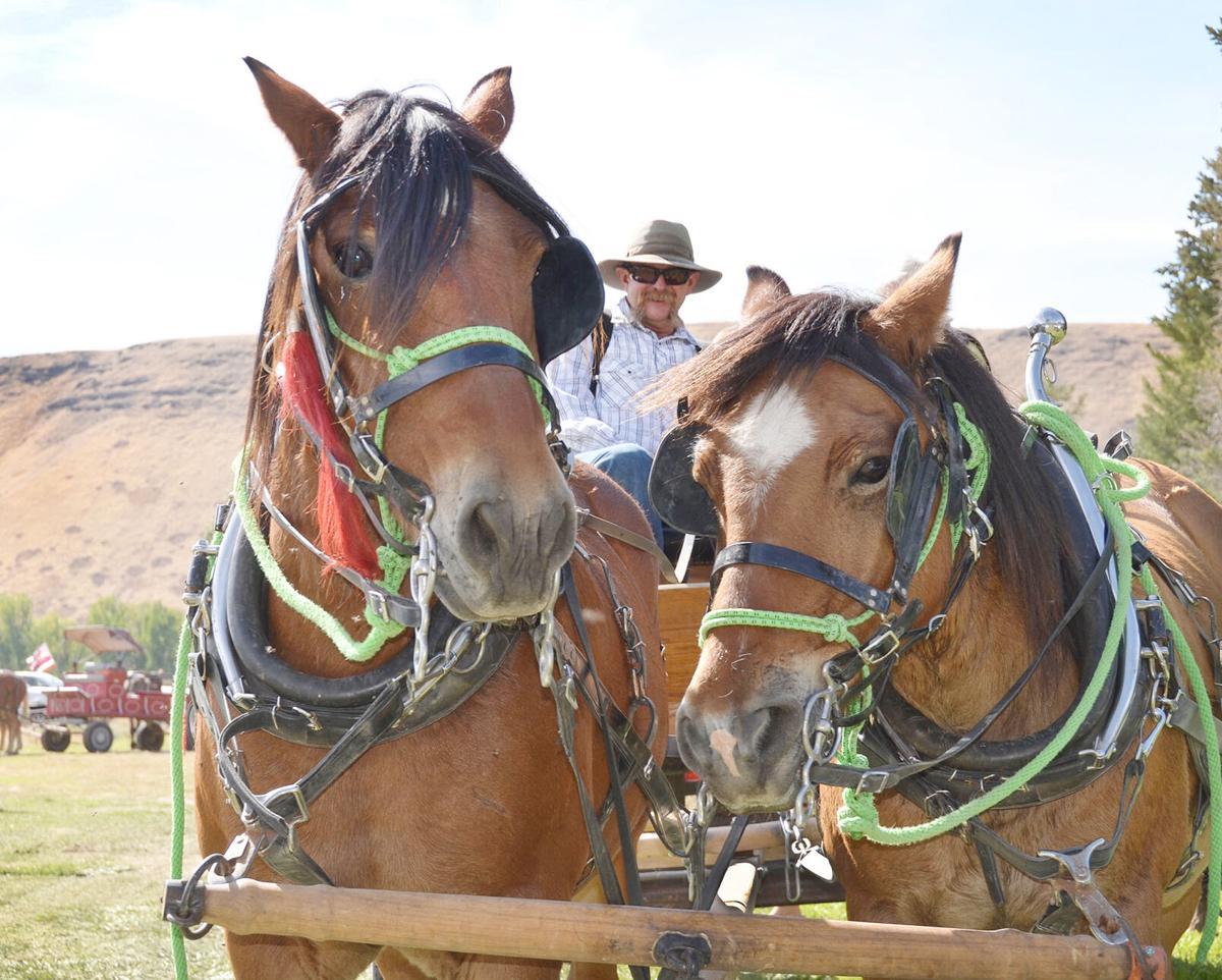 TW QUIZ Bill Holloway horse team.jpg