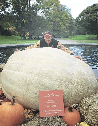 Big pumpkins, big business