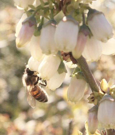 Bee colonies stable despite steep annual losses