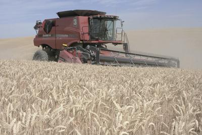 NW wheat harvest