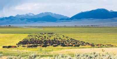 Grazing guru teaches ranchers 'intensive' approach