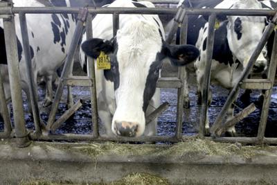 Washington dairies win concession on new manure rules