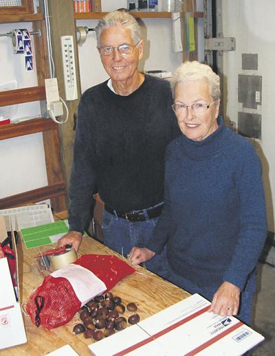 Retirees put skills to work raising chestnuts
