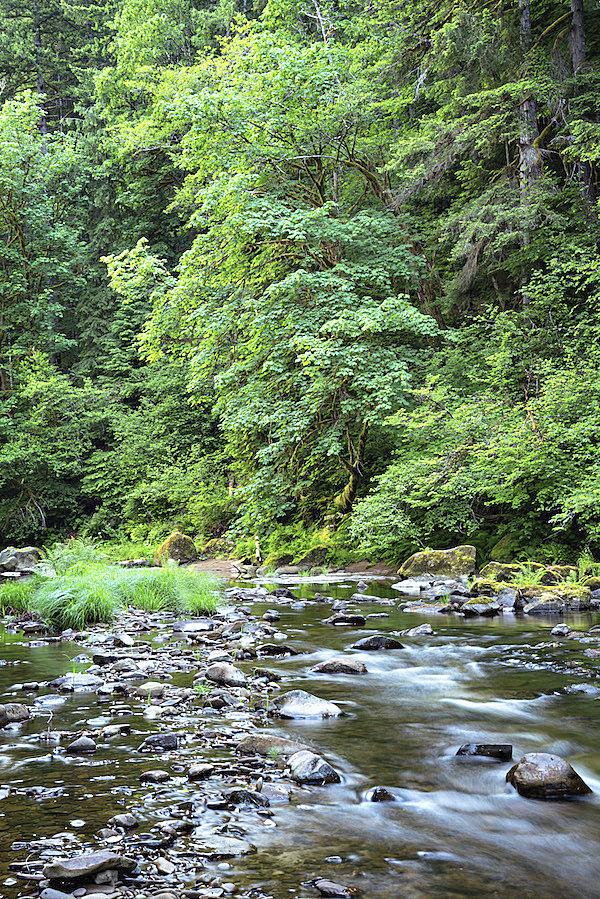 Elliott State Forest timber ruling