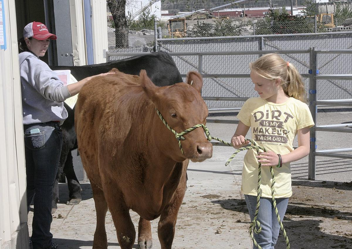 Youths learn life lessons raising livestock