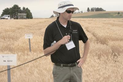 New WSU variety performs well under stress, breeder says