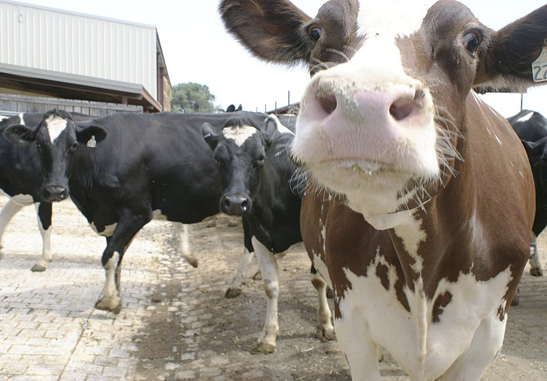 USDEC predicts another tough year for dairy