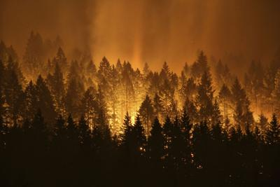 New bill in Senate aims to thin forests, stem wildfires