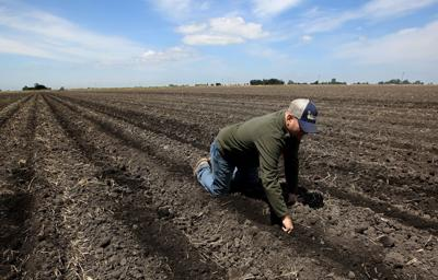 Sacramento-San Joaquin River Delta farmers plan to slash water use