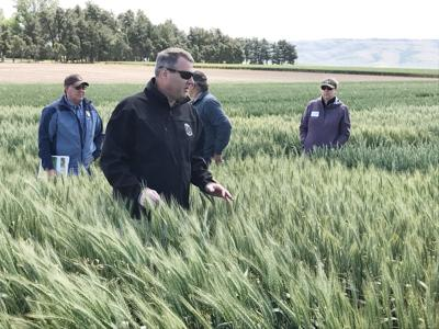 Limagrain provides wheat variety update