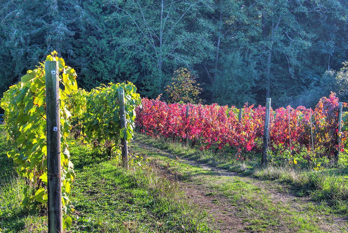 HST Bainbridge Vineyards.jpg