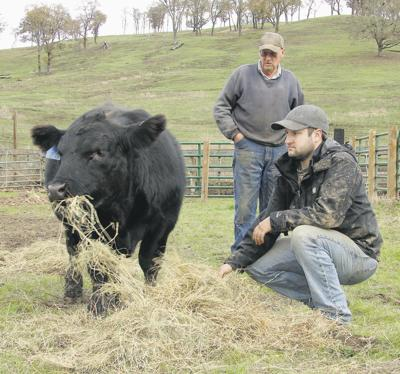 Ranchers balance hay use with bottom line