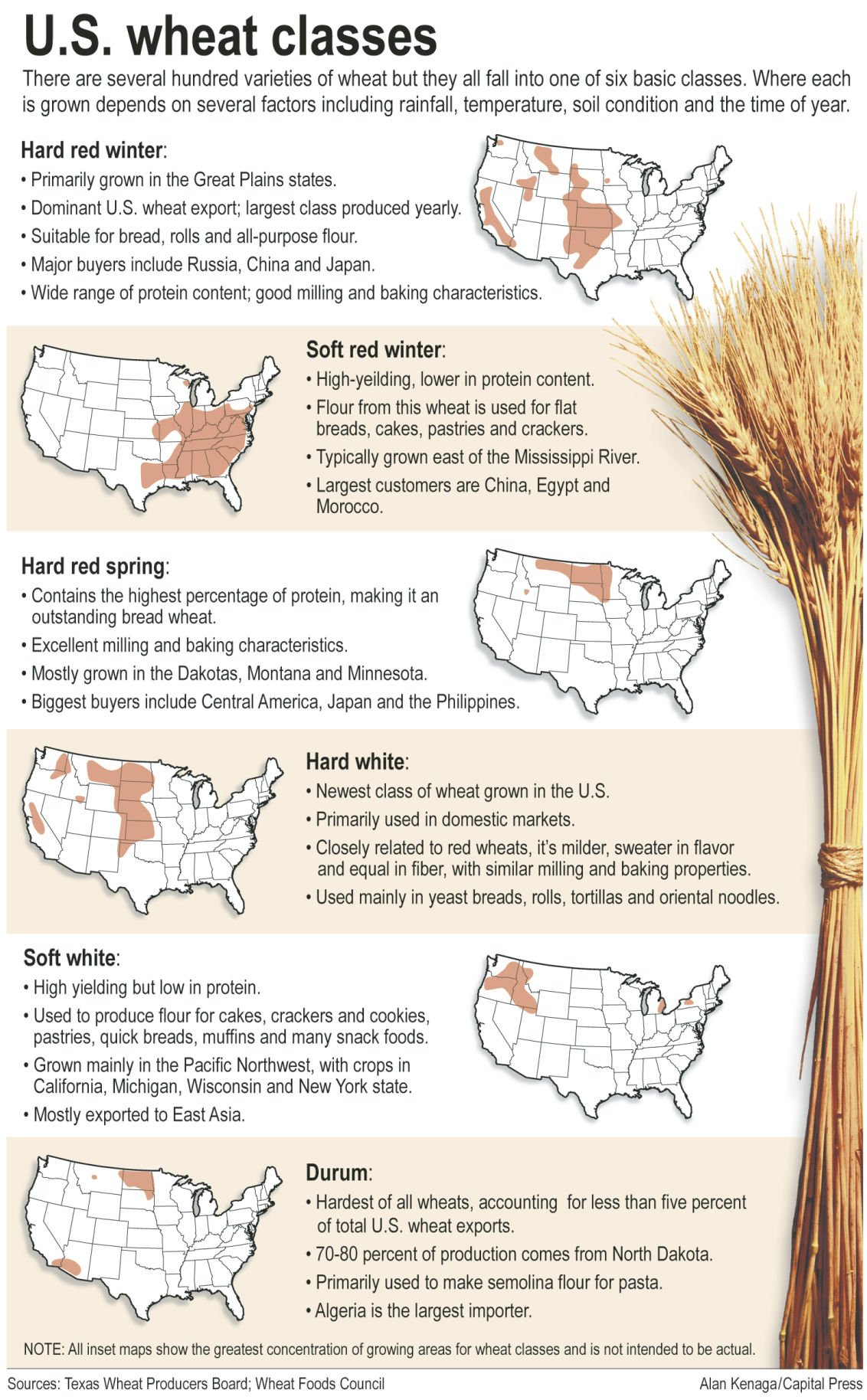 Wheat wizards open trade doors | Ag Sectors | capitalpress com
