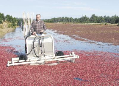 Grower cultivates environment, crops