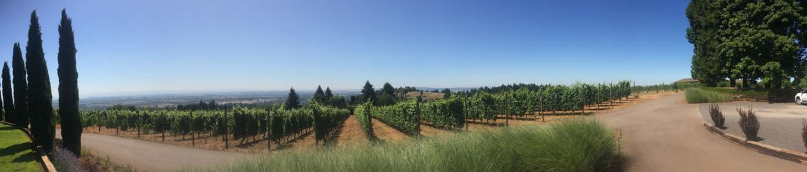 Wine country