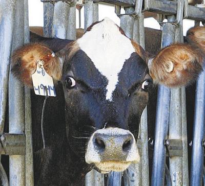 E. Coli outbreaks spark raw milk warning