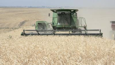 West Coast grain report
