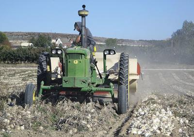 2013 a challenging year for onion growers