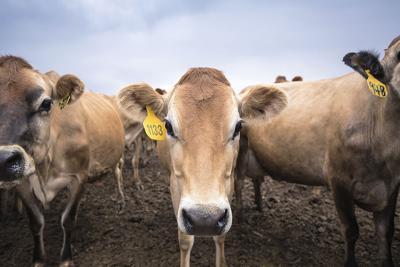 Idaho dairy industry