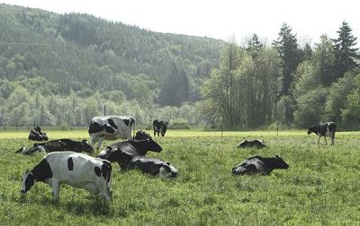 Research puts numbers to organic dairies' success