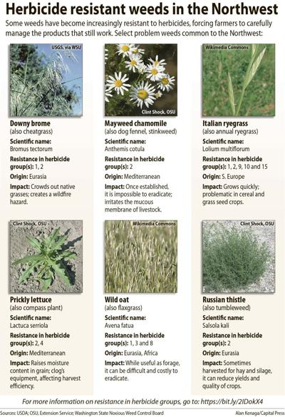 Herbicide-resistant weeds in the NW