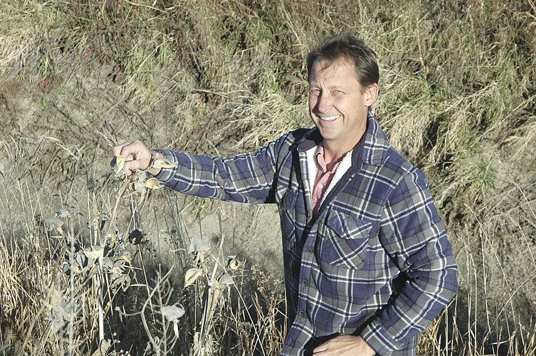 Aberdeen center studying milkweed to benefit butterflies