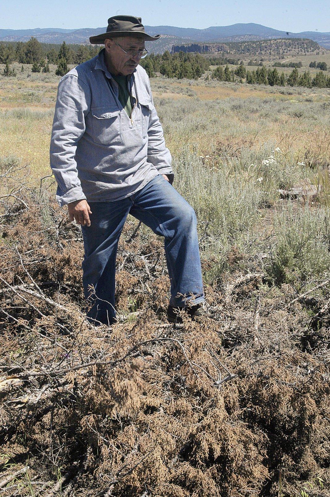 In Central Oregon, landscape benefits from removing juniper trees