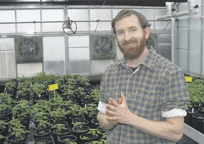 Western innovator: Researcher shines light on quinoa