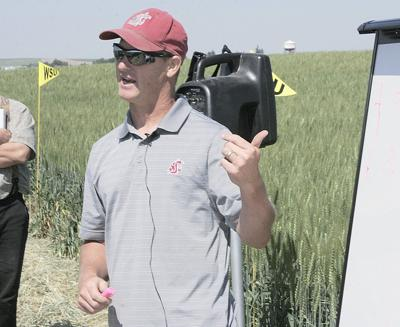 Esser named interim director of WSU cereal variety testing program