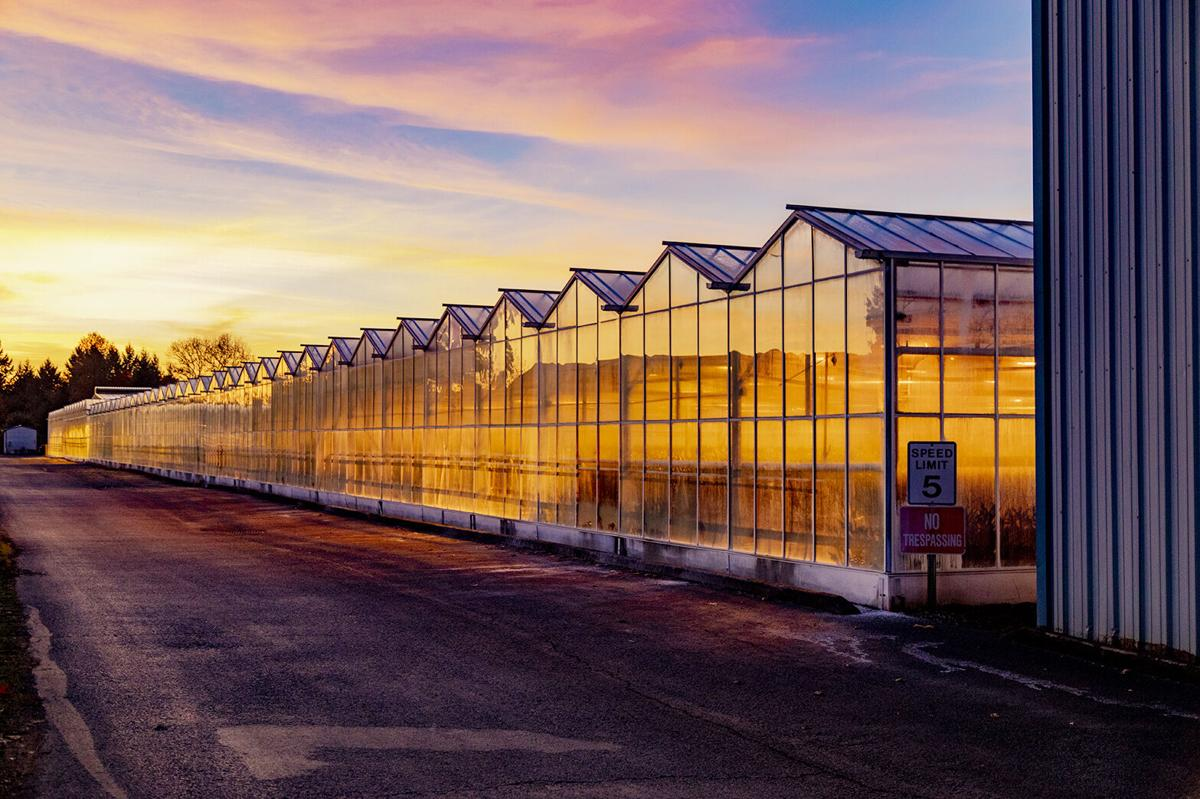 Oregon Flowers greenhouses