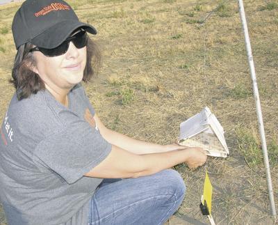 Tuberworm reappears in Basin potato fields