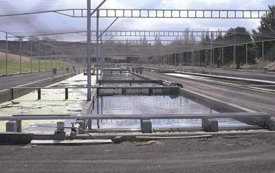 Idaho Supreme Court water ruling supports Rangen trim line