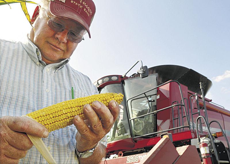 Experts predict bin-busting corn crop