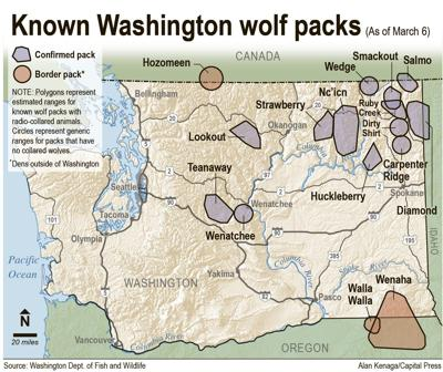 Washington allows sheep rancher to kill wolves