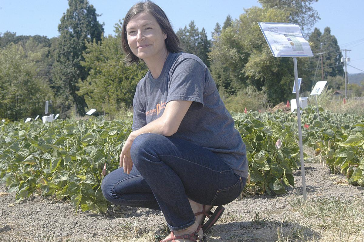 Oregon State's dry farming project hosts field days in August