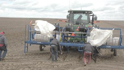 Southern Idaho grower raising hay with buried drip