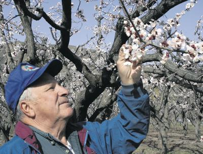 Growers get to work with early bloom