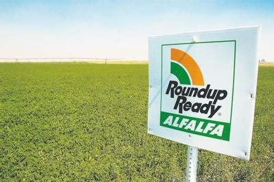 Adoption of biotech alfalfa lags other GMO crops