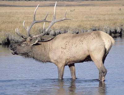 House panel OKs higher pay out for deer, elk damage