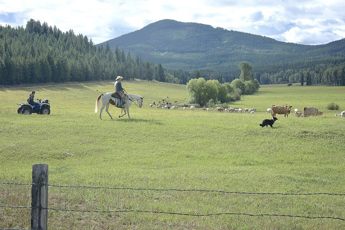Helping ranchers deal with wolves