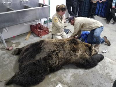 Grizzly bear protections