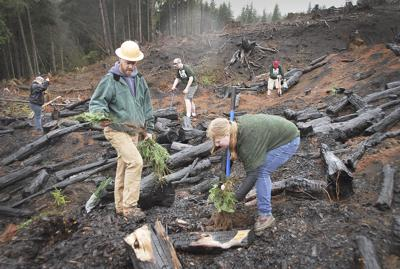 Tillamook reforest plan